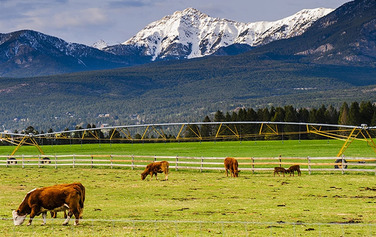 Idaho Ranches For Sale >> Savvy Cattle Ranch Investing | Fay Ranches