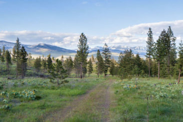 Montana Ranch for Sale Wild Horse Mountain Ranch