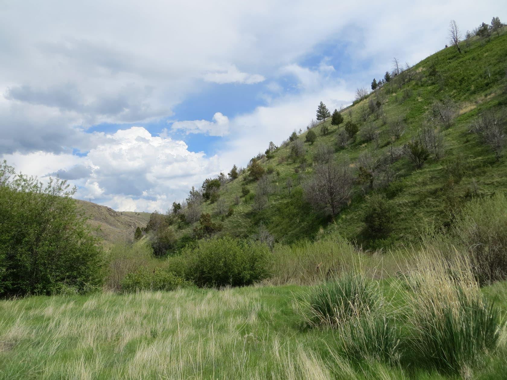 pasture land montana bear trap canyon fishing ranch