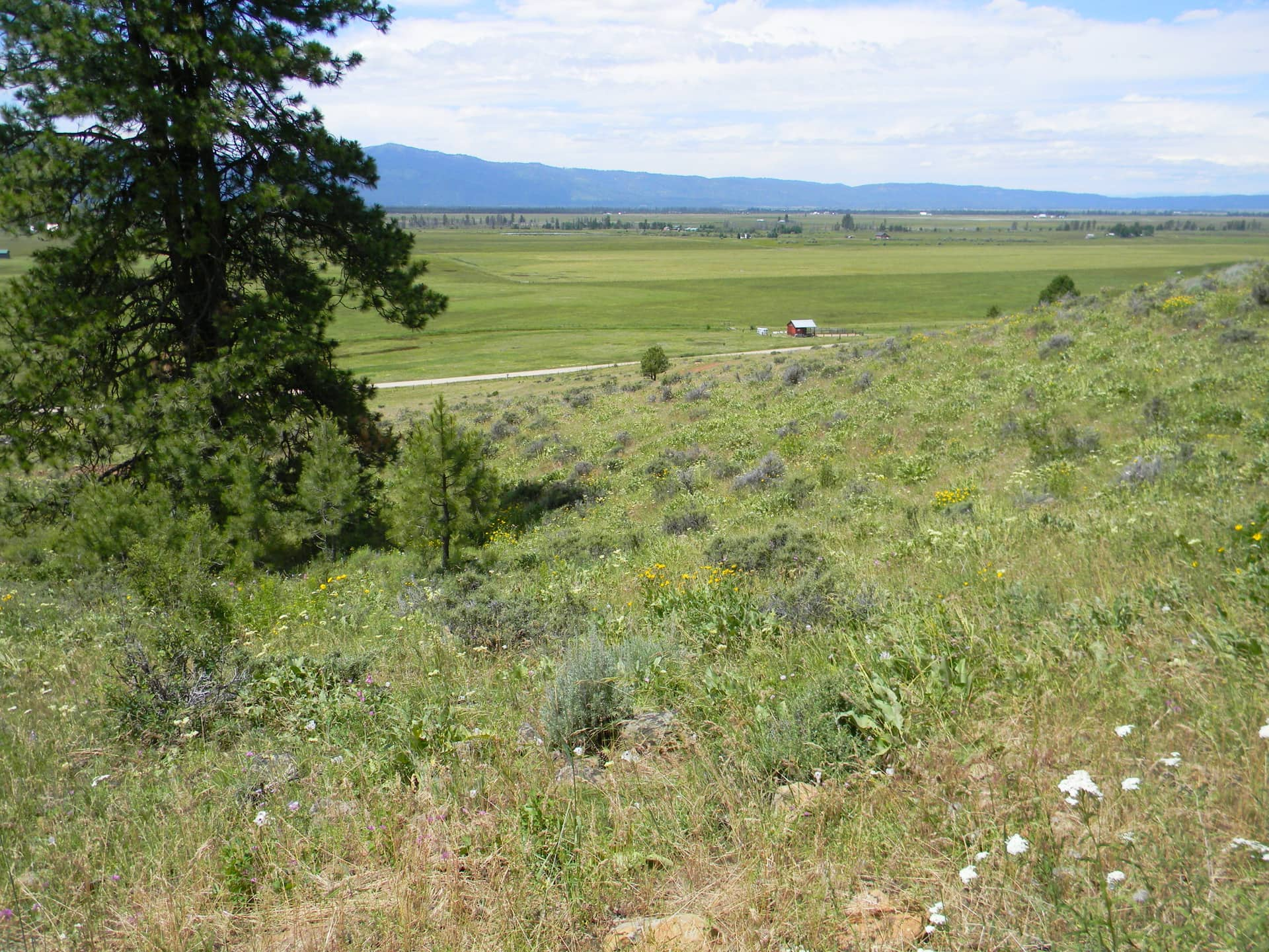 Finlandia Mountain Ranch Meadow View