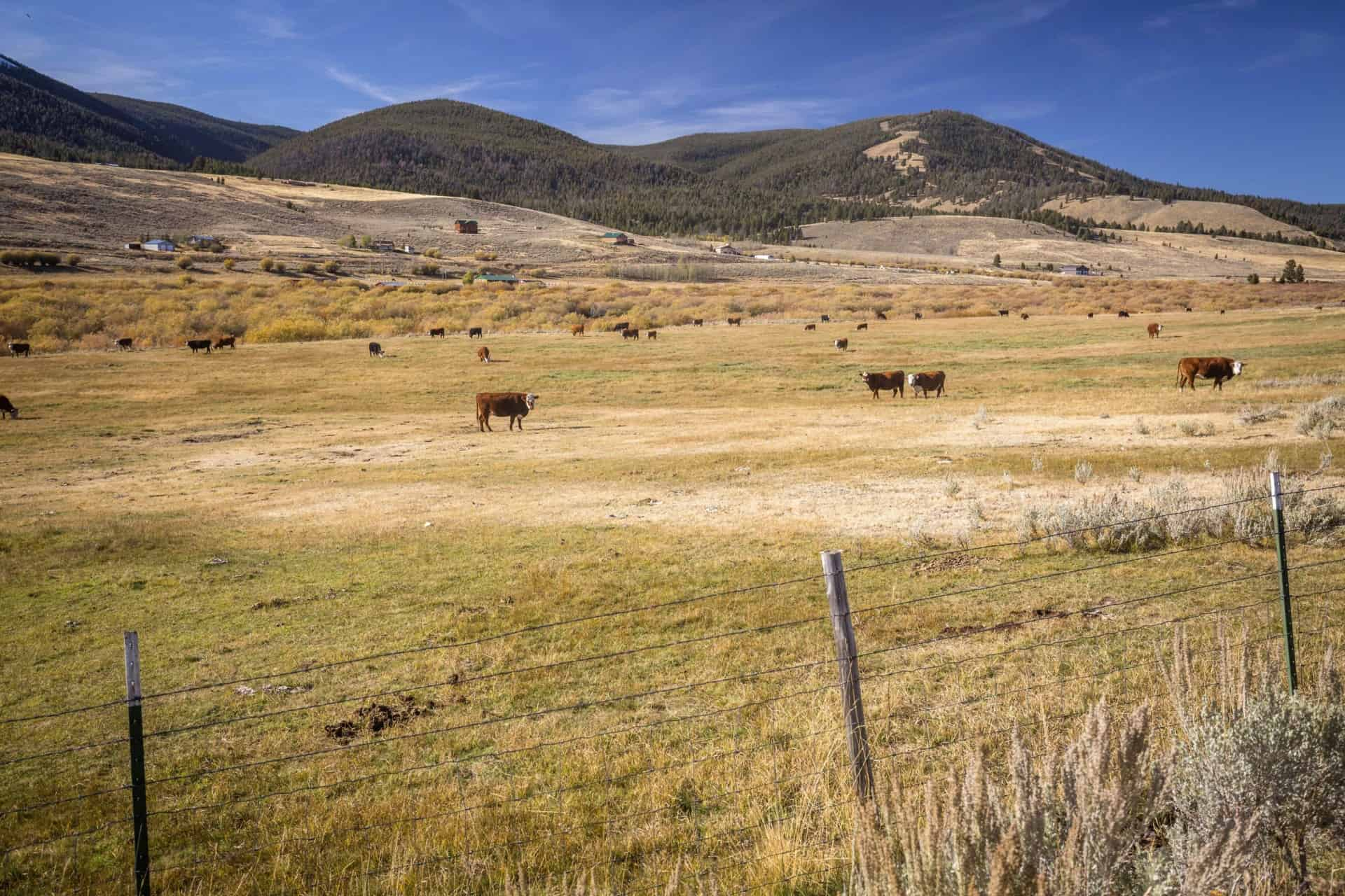 cattle_fencing_ranch_montana