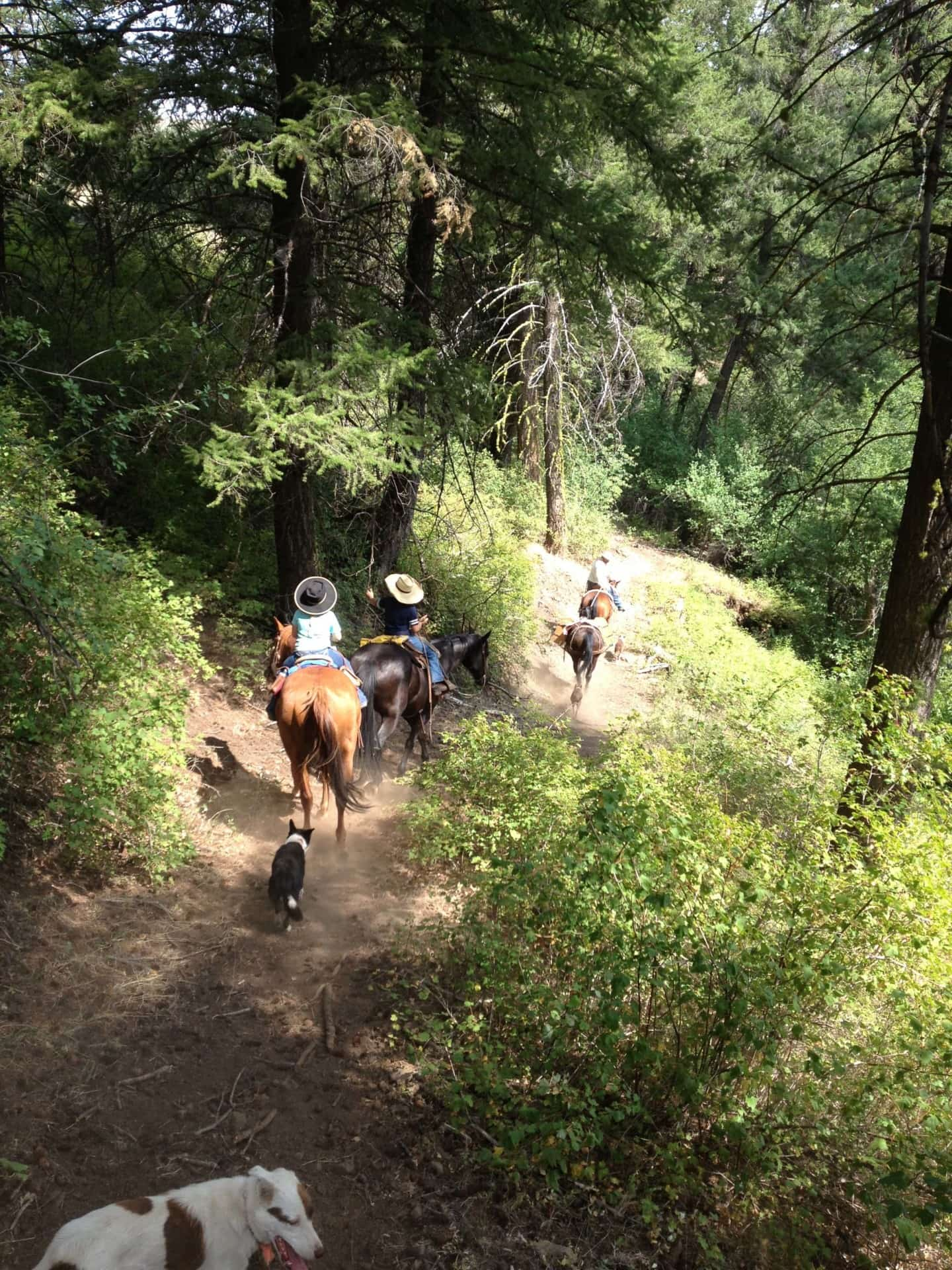 Trail Ride Idaho Mann Creek Ranch