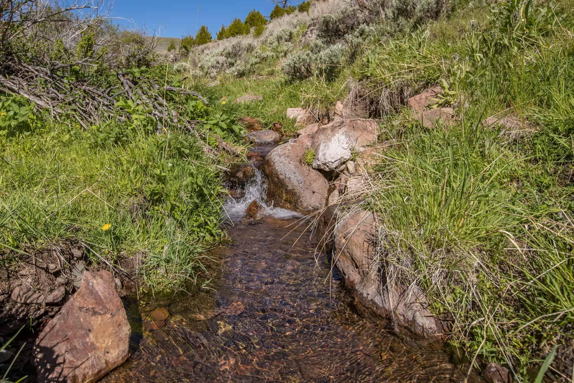 hunting montana v timber creek ranch