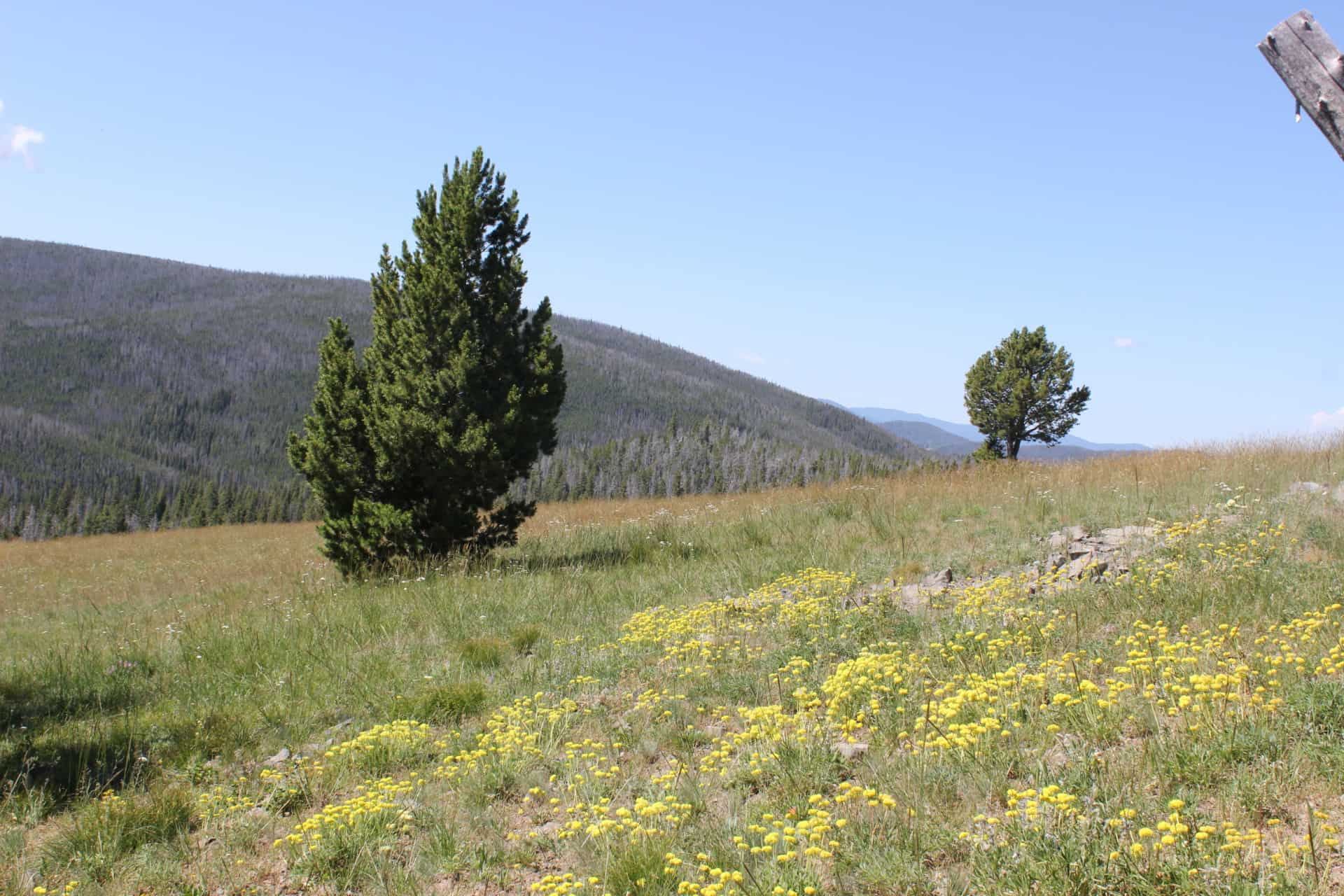 ranches land for sale montana hoodoo creek mountain retreat