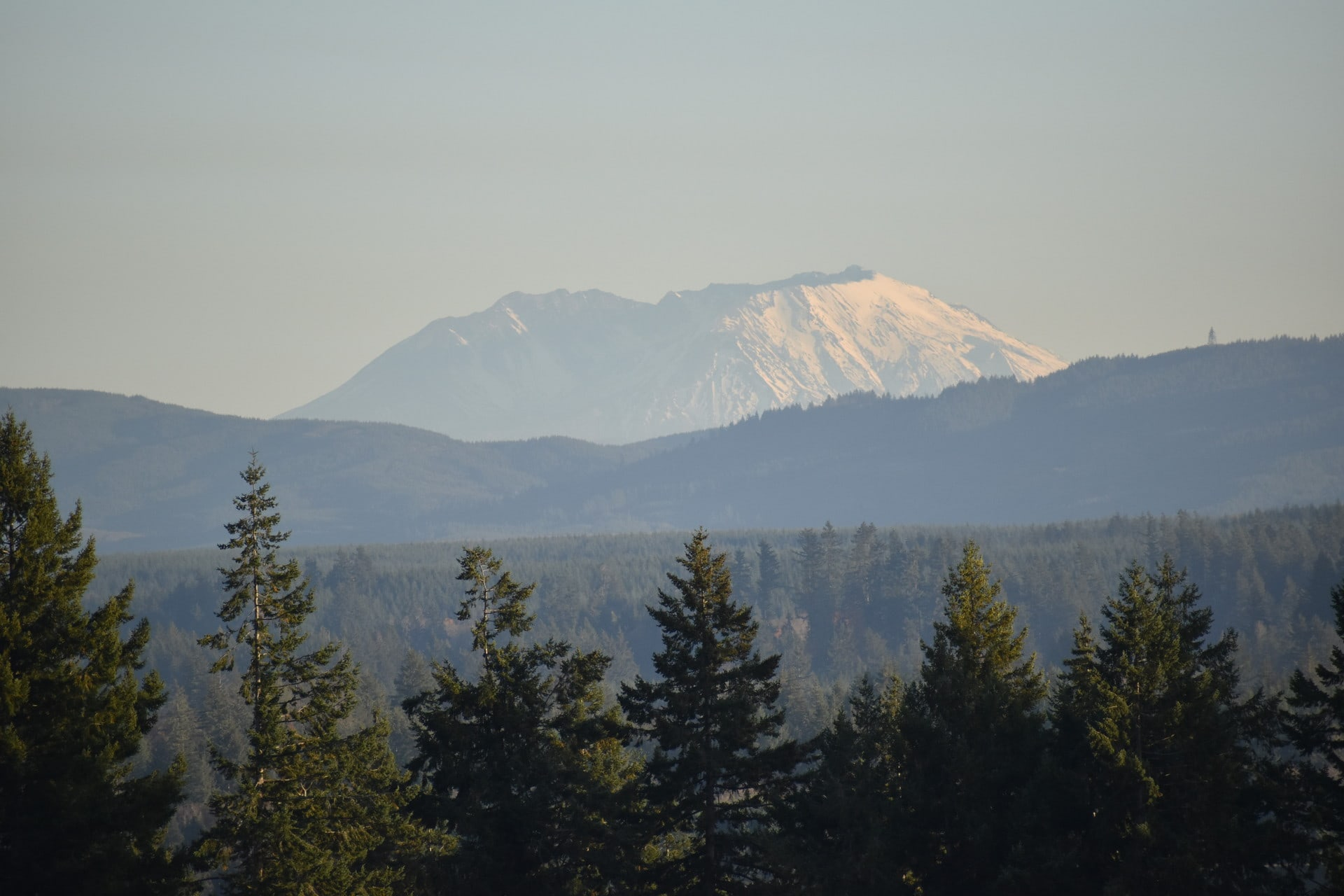 Tenino Alpaca Ranch Washington Mount St Helens Views