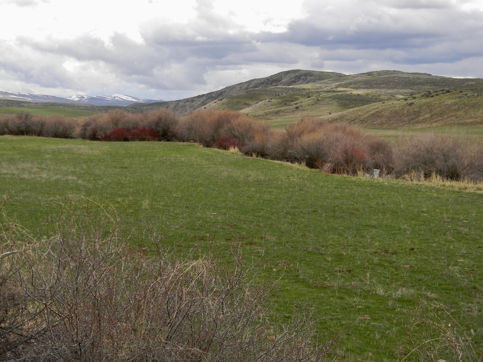 Grassy Meadow Idaho Silver Sage Ranch