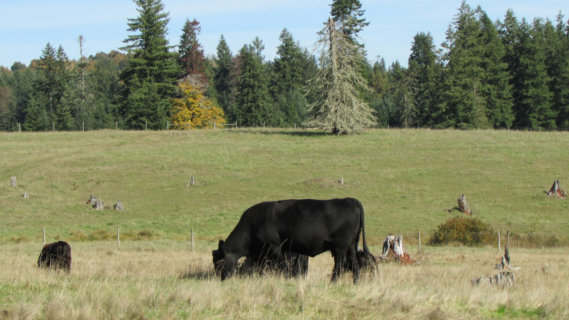 grazing land cattle washington t90 cattle ranch