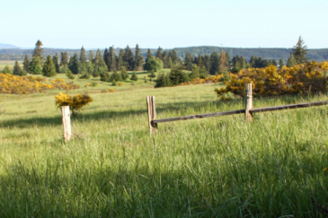 washington historic cattle ranch for sale t90 cattle ranch