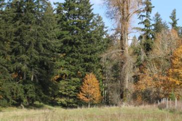 washington timber property for sale lemon hill ranch