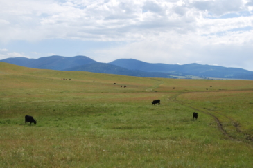 cattle property for sale montana little valley ranch