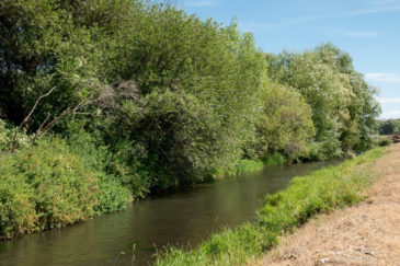 waterfowl hunting property for sale oregon chandler hereford ranch