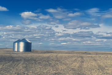 montana farm for sale high line organic wheat farm