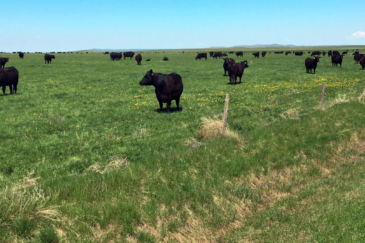 south dakota cattle ranch for sale northern plains grassland and cattle ranch