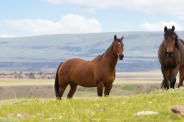 montana ranch for sale pryor mountains outlaw ranch