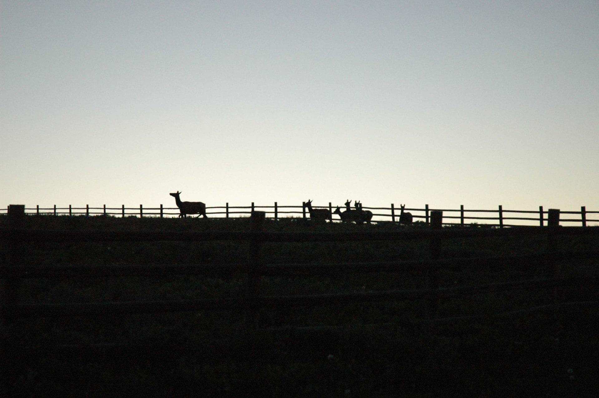 republic ranches sunset colorado buckskin ranch