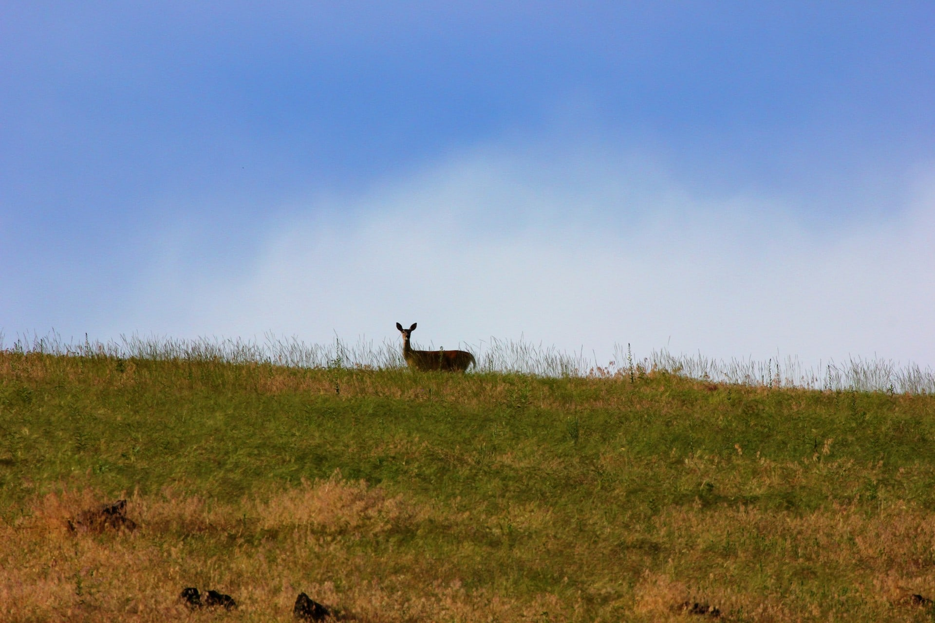 big game hunting property for sale Montana Rock Creek Cattle Ranch