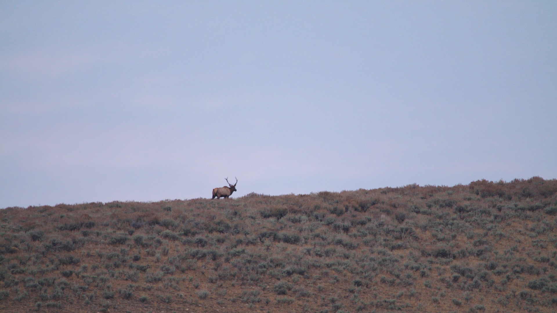 Big Game Hunting Ranch For Sale Montana Arrow Ranch