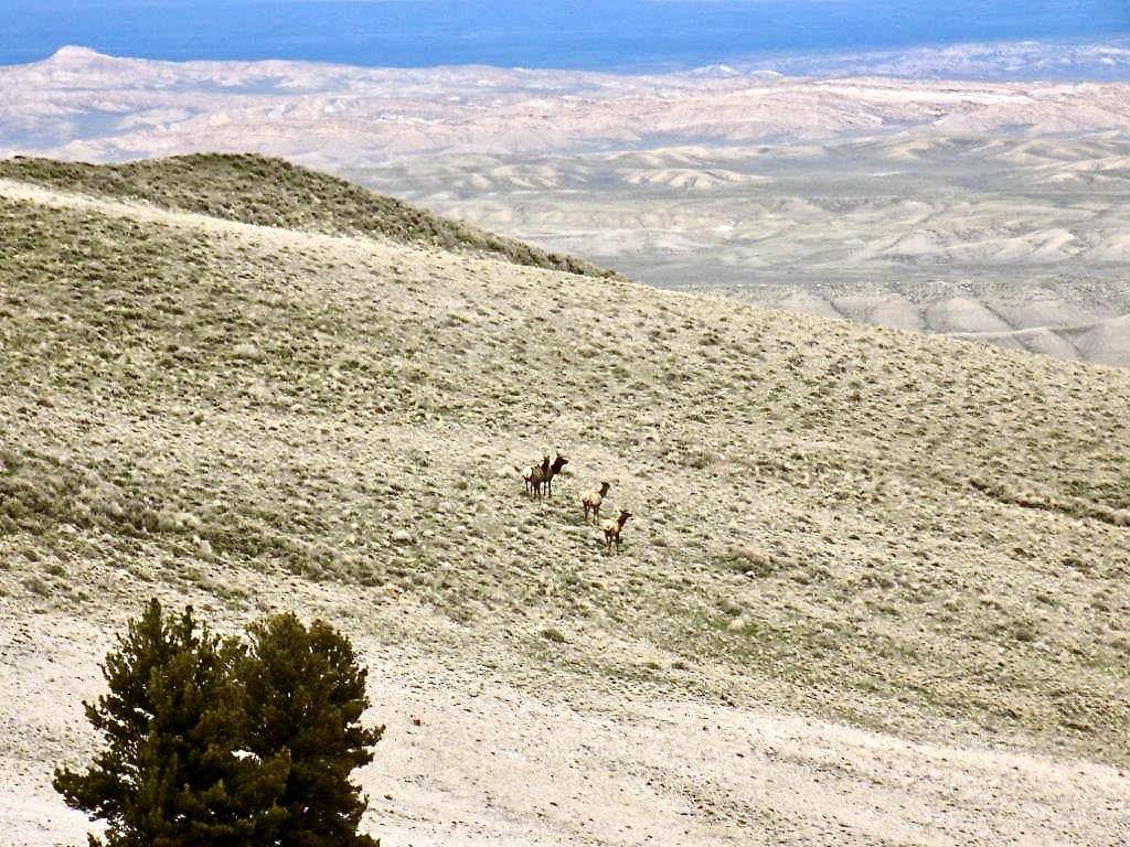 big game hunting ranch wyoming muskrat open
