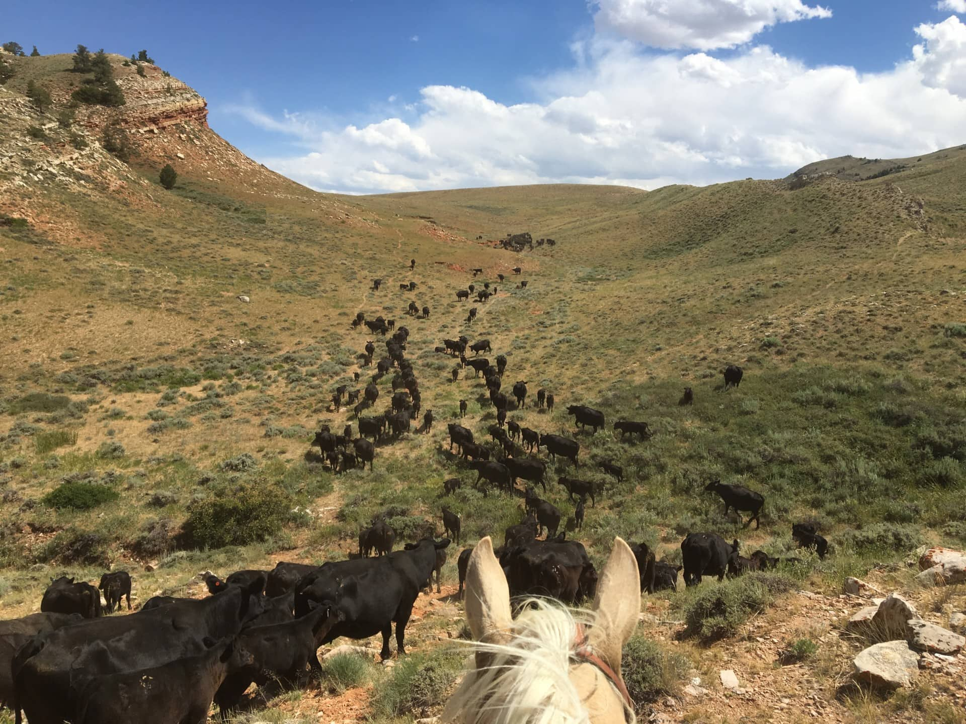 efficient cattle ranch wyoming hidden springs ranch