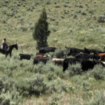 oregon cattle ranch land for sale lost basin ranch