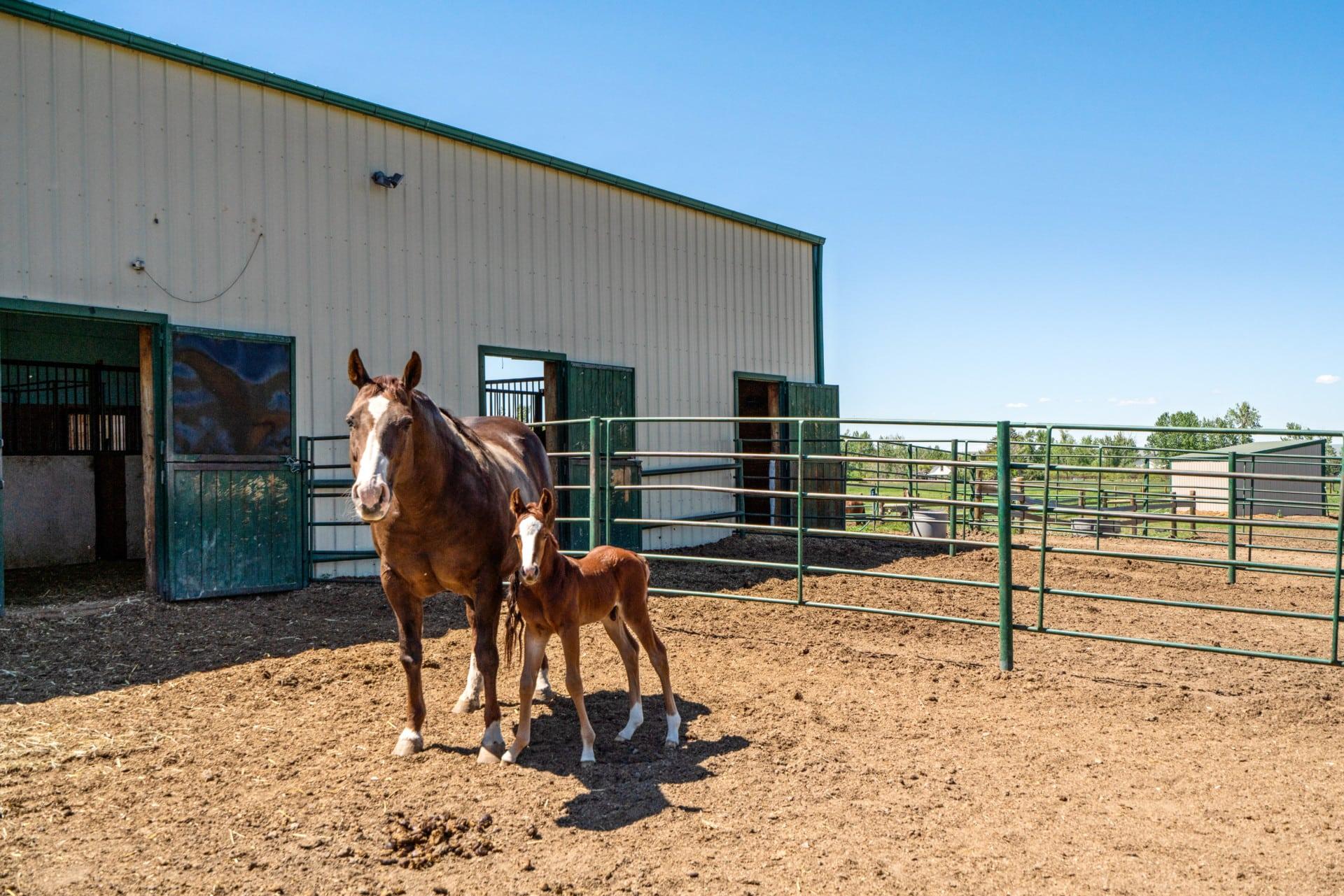 animals montana absarokee horse ranch