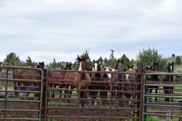equestrian property for sale oregon john day river ranch