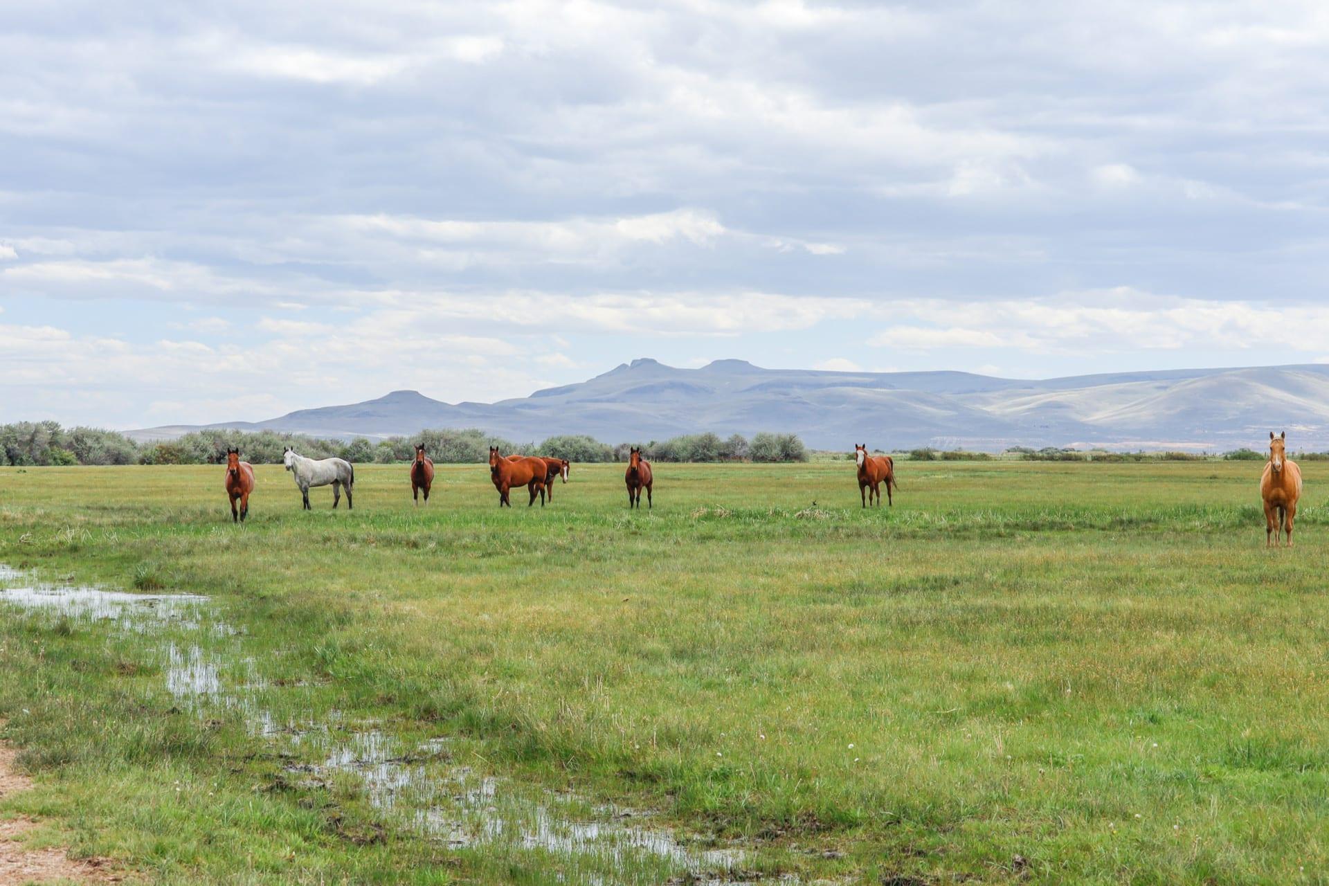 horses acres nevada lucky 7 ranch