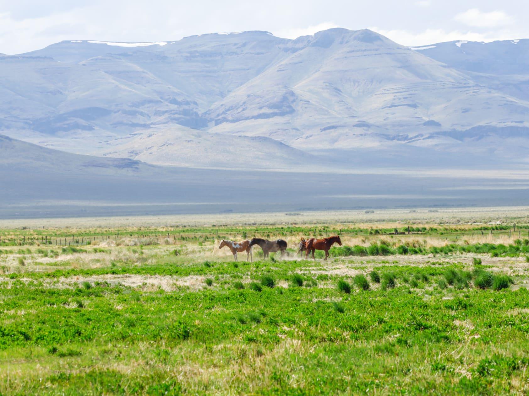 horses grazeland blm oregon lucky 7 ranch