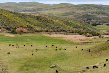 idaho land for sale mann creek valley farm and ranch