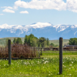 montana home for sale absarokee horse ranch