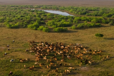 cattle property for sale texas carancahua bend ranch