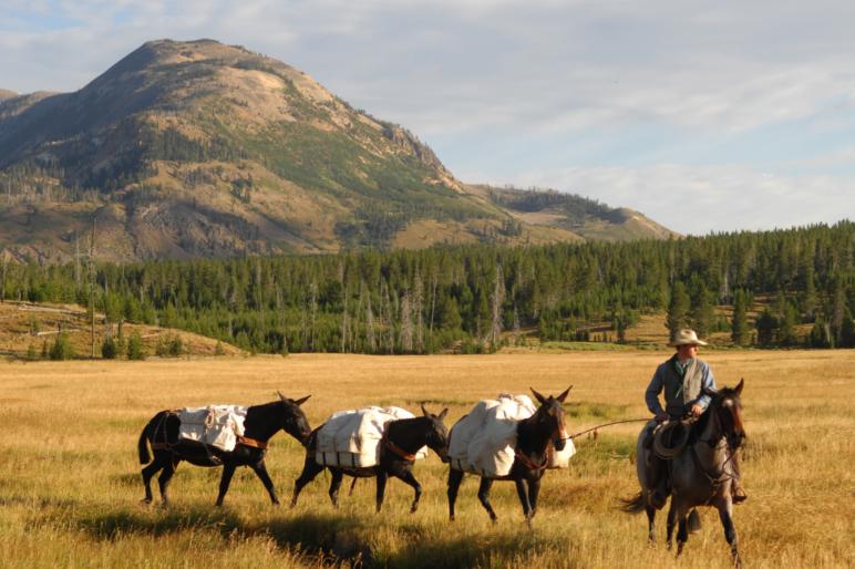 Matt Henningsen ranch sales montana horses