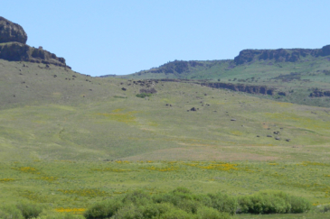 idaho property for sale Cow Creek Ranch